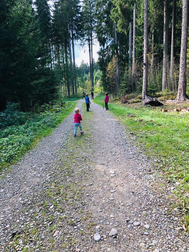 Wandern im Grünen Wald mit Kindern