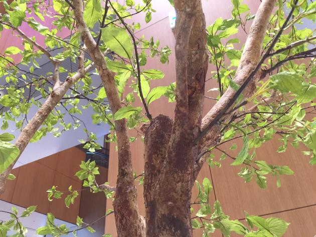 本物の幹にプラスチックの葉っぱがついた偽物の木。偽物だけどクオリティが高い。