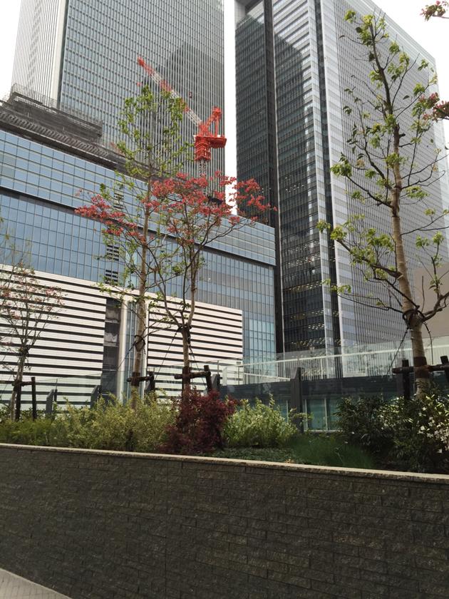 赤い花が咲いているハナミズキ。