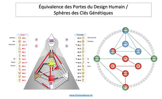 Equivalence Portes du Design Humain/Clés Génétiques