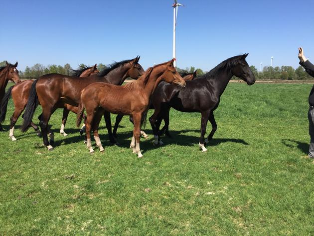 Diamanda als Jährling, Frühjahr 2016