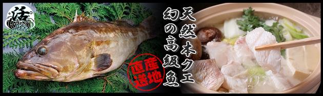 クエの季節がきました。響新栄店で幻の高級魚をご堪能ください。