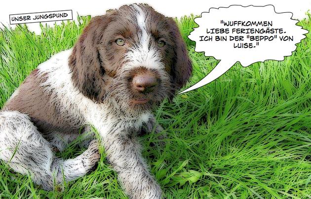 Beppo von Luise - Unser kleiner Hofhund