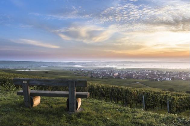 Le Grand Cru Steinert à Pfaffenheim marqué par l'héritage des Teutoniques https://www.riefle.com/Galerie-Photos/Paysages-viticoles/