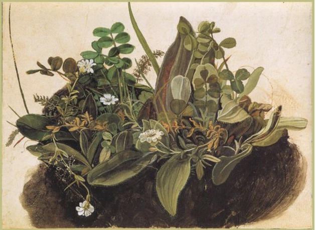 La Petite touffe d'herbes, Albrecht Dürer, aquarelle, 1490