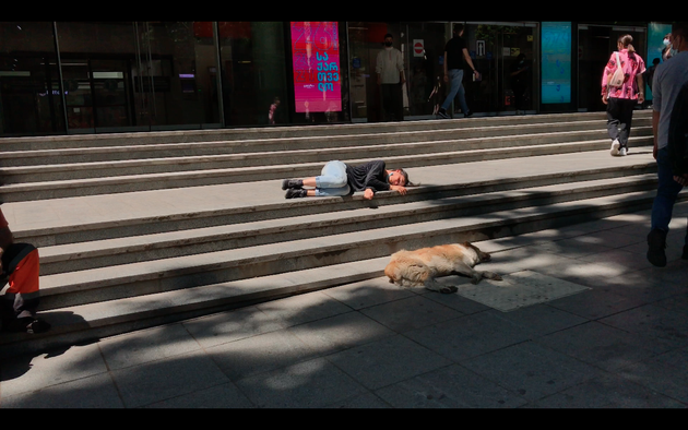 """Video Still """"REST"""" performativ interaction with tbilisi dogs dog human together equality donna haraway, asleep GODOG"""