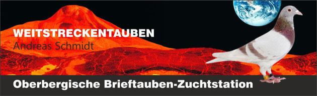 Oberbergische Brieftauben-Zuchtstation – Weitstreckentauben von Andreas Schmidt