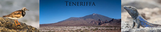 Teneriffa 2012