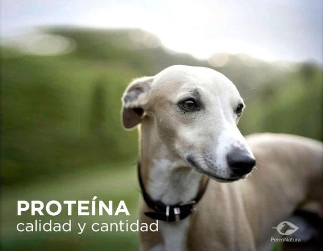 calidad de la proteína dieta para perros