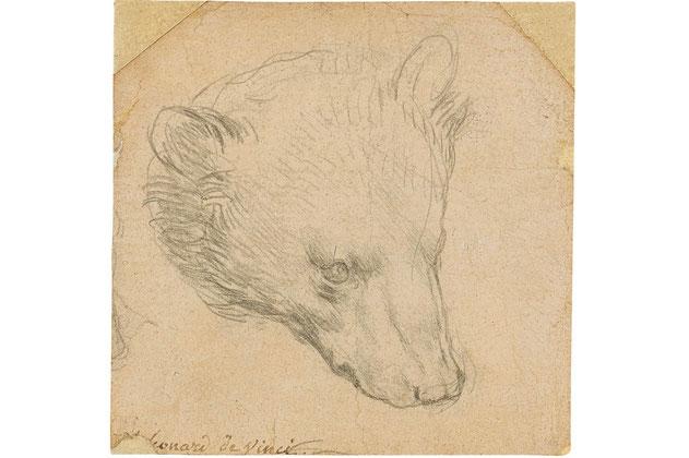 レオナルド・ダ・ヴィンチ『熊の頭』