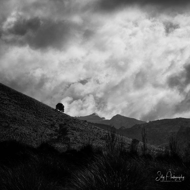 Mallorca / Serra de Tramuntana, Tramuntana Gebirge, Baum, Wolken, 2014, © Silly Photography