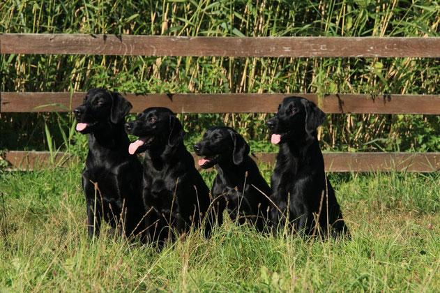 Bash, Humphrey, Blush, Hazel (Foto: Joshua Scheuerer)