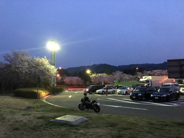4月1日の甘楽パーキングエリア(群馬県)。群馬のこのあたりがちょうど満開ラインでした。