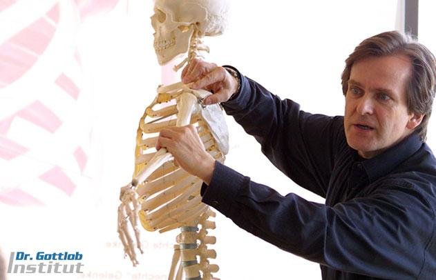 Schultergürtel Lehrgang Dr. Gottlob Institut für Personal Trainer, Physiotherapeuten, Ärzte, Fitnesstrainer etc.