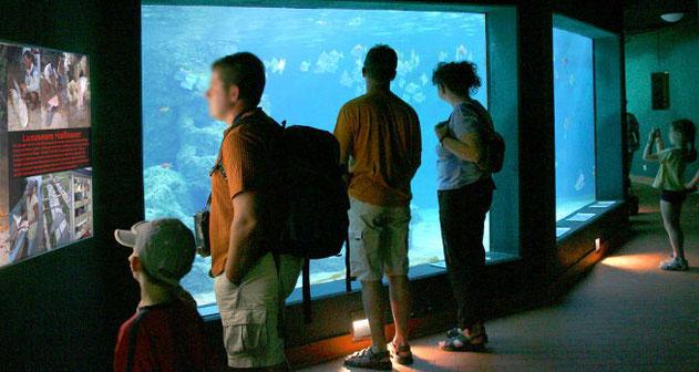 Bild: Großaquarium im Aquarium Wilhelmshaven