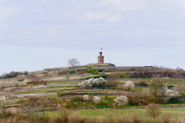 Rheinland Pfalz Weinberge