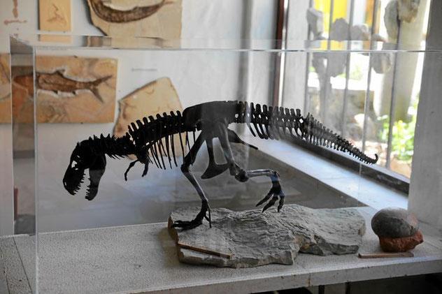 Tyrannosaurus klein, USA