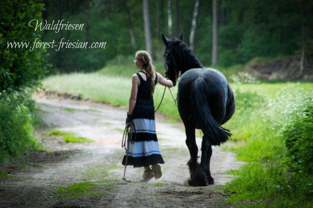Waldfriesen www.forest-friesian.com | Friesenpferde