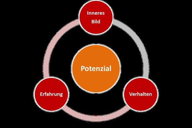 Der Potenzial Zyklus
