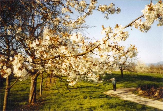 *entlang Wiesen und Obstfeldern auf dem Weg zur Koppel...