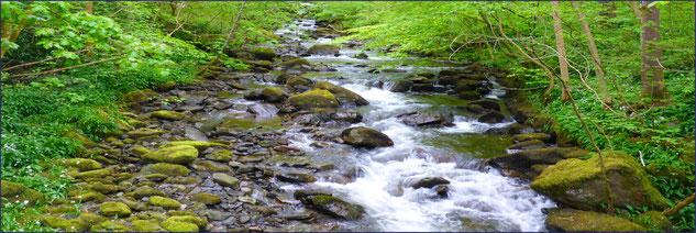 Im Fluß des Lebens - Herausforderungen mit Leichtigkeit begegnen: MediTrigon Freiburg-Haid