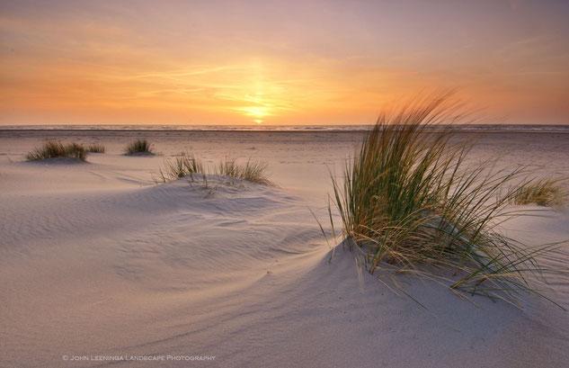 262. Texel helmgras op het strand