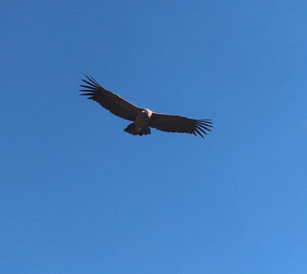 El condor pasaaaaaaaa