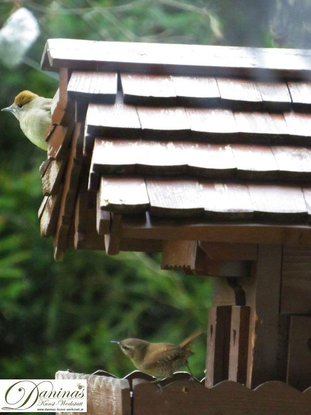 Mönchsgrasmücke am Vogelhaus-Dach stört kleinen Zaunkönig by Daninas-Kunst-Werkstatt.at