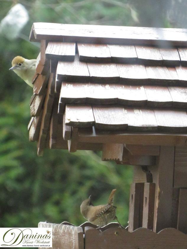 Mönchsgrasmücke landet am Dach des Vogelhäuschens und stört kleinen Zaunkönig. By Daninas-Kunst-Werkstatt.at