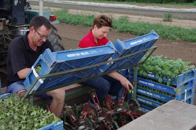 Hier hilft die ganze Familie - Leonie Rapp am Steuer, Petra und Andreas Rapp beim Bestücken der Setzlinge