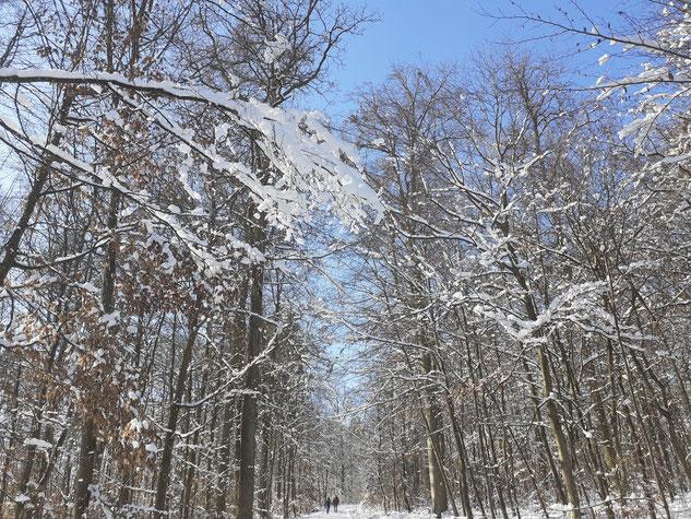 Winterlicher Ketterwald
