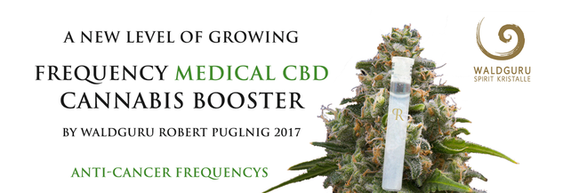 medical cbd hemp, medical hemp, waldguru´s frequeny cannabis booster technology, frequency medical marijuana, anti cancer frequency marijuana, frequenz cannabis booster, Robert Puglnig,  www.puglnig.at, high spirit cbd,