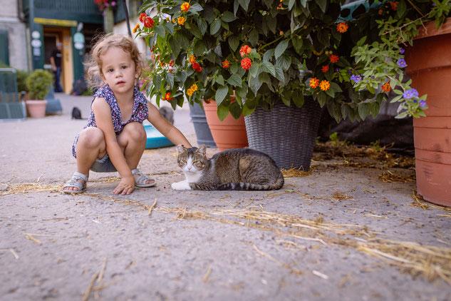 Unsere Katzen Melody, Nala und Tinkerbell, Percy und Katerle machen es sich im Hof gemütlich.
