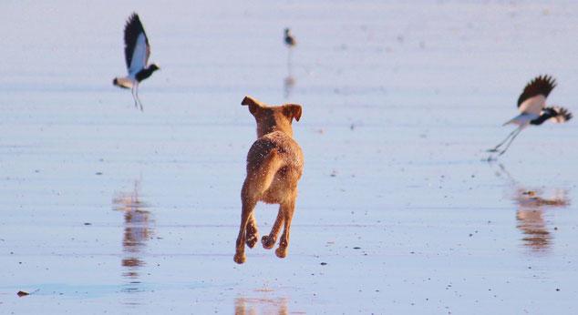 Osteopathie Hund in Bewegung