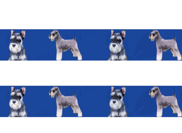 Webband Schnauzer Borte Hunde Hund