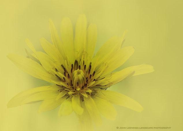 226. Gele bloem