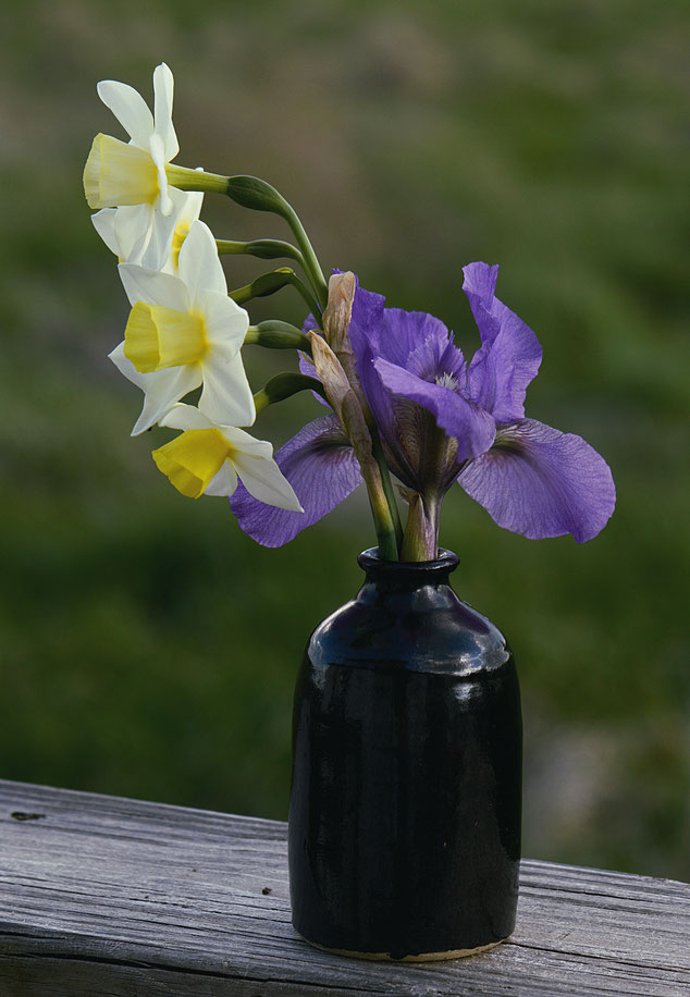 in a vase on Monday, iris Pixie Power, narcissus jonquilla Silver Smiles