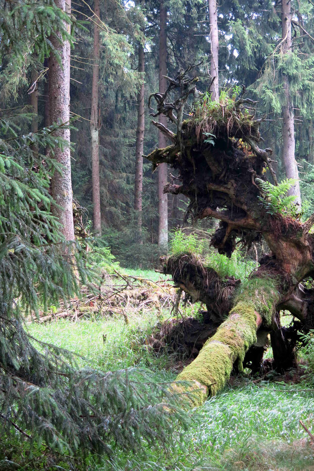 Wolfswarte Harz