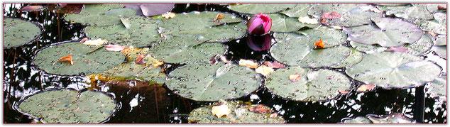 Teich im Garten Haus am Steinbach