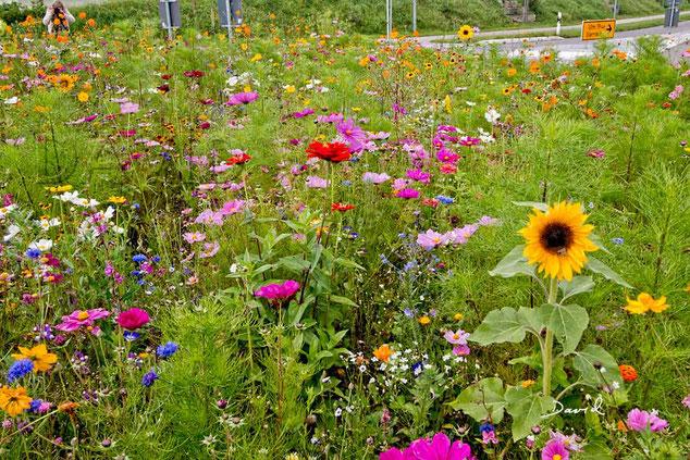 """Optisch """"Ui"""", ökologisch """"Pfui""""! Die Bedürfnisse der einheimischen Insekten werden mit solchen Prunkmischungen nur unzureichend gestillt."""