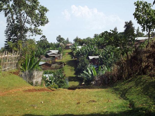 Voyage Séjour Trek Trekking Randonnée Road Trip en Ethiopie Visite de la Vallée de l'Omo en Ethiopie. La Ville de Dorze, Les Maisons Éléphants.