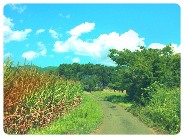 夢の中の田舎道