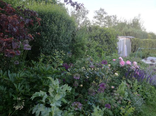 winterharte Stauden voller Pracht, Gartenpflege mit Kompost,