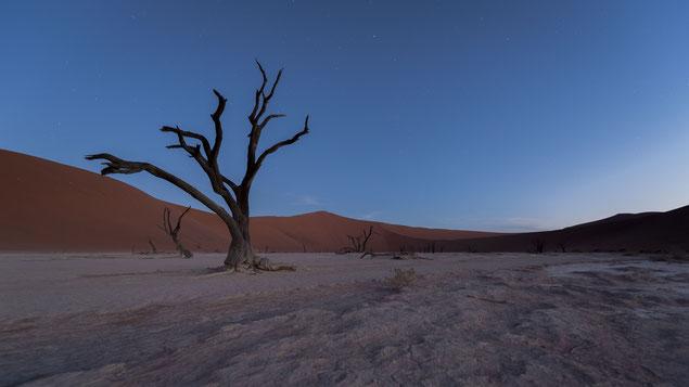sossusvlei dead vlei namibia - appr. 6:30 pm, d810, 14mm, f8, 59 sec., iso 100