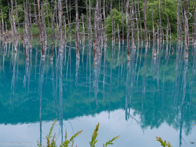 青い池(美瑛町)