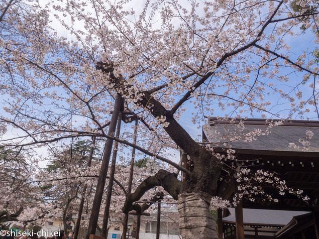 周りはそれほどでもないのにこの木は咲いている。にしても人がすごい。。
