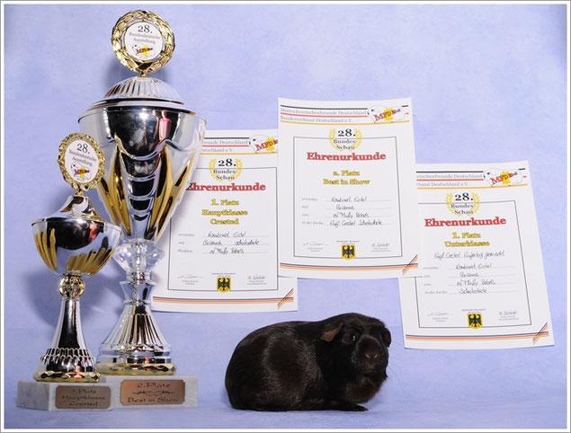 Danke an Iris Rezk-Salama! Unvergessen unsere Brianna of Fluffy Rebels! 2. Platz BEST IN SHOW in Bergheim Quadrath Ichendorf 2016. Brianna *20.03.2015- +12.08.2016