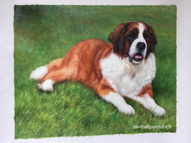 portrait-animalier-chien-saint-bernard