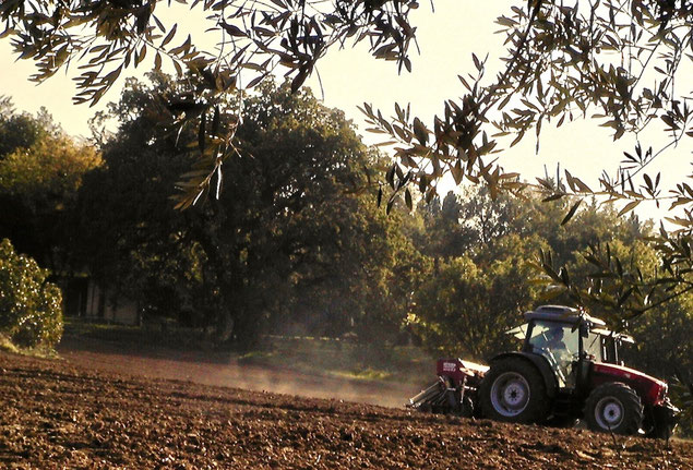 sowing, tractor, arable land, Agriturismo, Casafredda, Arezzo, Tuscany, Toscana