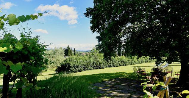 Sycamore tree, villa, Casafredda, Arezzo, Toscana, Tuscany, Agriturismo, casa vacanza